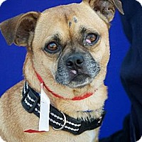 Adopt A Pet :: Quinn - Anaheim, CA