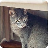 Adopt A Pet :: Xavier - Markham, ON