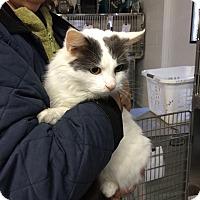Adopt A Pet :: Tippy - Arlington, VA