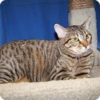 Adopt A Pet :: Ireland - Colorado Springs, CO