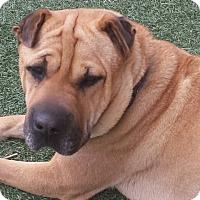 Adopt A Pet :: Teagan - adopt pending - Mira Loma, CA