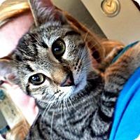 Adopt A Pet :: Aurora - Jefferson, NC