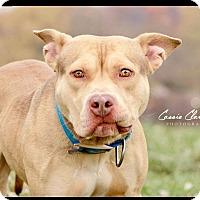 Adopt A Pet :: Mickey - Urgent! - Zanesville, OH