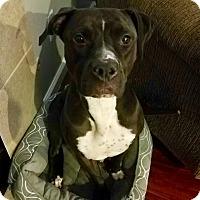 Adopt A Pet :: Baja (D) - Santa Ana, CA