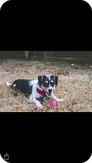 Terrier (Unknown Type, Small) Mix Dog for adoption in Woodstock, Georgia - Casey