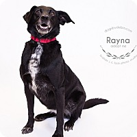 Adopt A Pet :: Rayna - Kansas City, MO