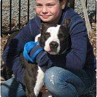 Adopt A Pet :: Angel - Middletown, NY