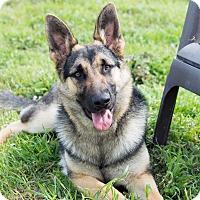Adopt A Pet :: Mira - Patterson, CA
