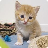 Adopt A Pet :: Nectarine - Youngsville, NC