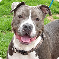 Adopt A Pet :: Zoey (47 lb) Close To Perfect - SUSSEX, NJ