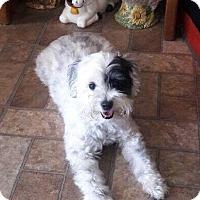 Adopt A Pet :: Dulche - Rancho Santa Fe, CA