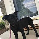 Adopt A Pet :: Blair