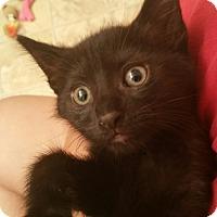 Adopt A Pet :: Sade - Richmond, VA