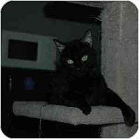 Adopt A Pet :: Addison - Phoenix, AZ