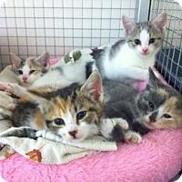 Adopt A Pet :: Calico's - Trevose, PA