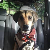 Adopt A Pet :: Annie - Gig Harbor, WA