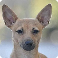 Adopt A Pet :: Grasshopper - Ormond Beach, FL