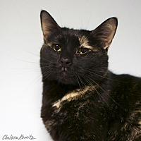 Adopt A Pet :: Leslie Winkle - Los Angeles, CA
