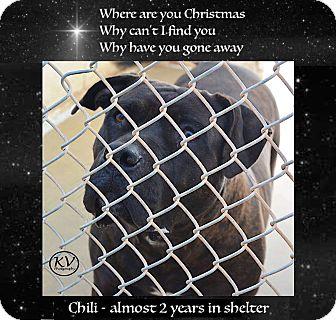Bullmastiff/Mastiff Mix Dog for adoption in Sautee, Georgia - Chili