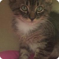 Adopt A Pet :: Blackie - Walnut Creek, CA