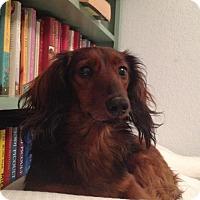 Adopt A Pet :: JoJo - Woonsocket, RI
