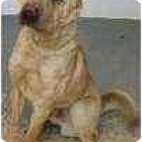 Adopt A Pet :: Albert - Bethesda, MD
