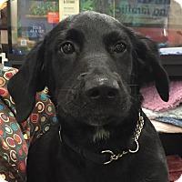 Adopt A Pet :: Prescott#1M - Orlando, FL