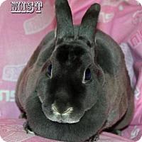 Adopt A Pet :: Mist - Walker, LA