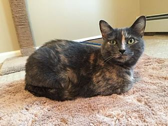 Domestic Shorthair Cat for adoption in Budd Lake, New Jersey - Jade