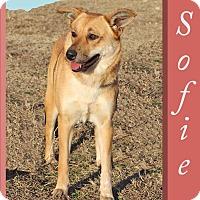 Adopt A Pet :: Sophie - Hillsboro, TX