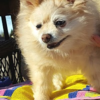 Adopt A Pet :: Rosie - Overland Park, KS