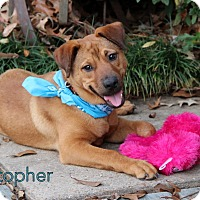 Adopt A Pet :: Christopher - Groton, MA