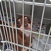 Adopt A Pet :: Mary Ann - Brownsville, TX
