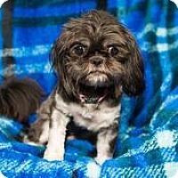 Adopt A Pet :: A - MINNIE - Stamford, CT