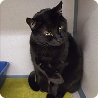 Adopt A Pet :: Onyx and kittens - Middletown, NY