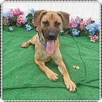 Adopt A Pet :: VERVILLE - Marietta, GA