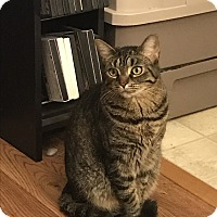Adopt A Pet :: Callie (COURTESY POST) - Baltimore, MD