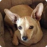 Adopt A Pet :: Josie - Tucson, AZ
