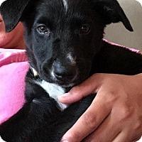 Adopt A Pet :: Bronson - Houston, TX