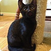 Adopt A Pet :: Marisa - Monroe, GA