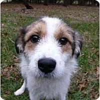 Adopt A Pet :: Trixie - Mocksville, NC