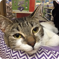 Adopt A Pet :: Sissy Sue - Monroe, GA