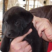 Adopt A Pet :: Bubbles - Glastonbury, CT