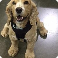 Adopt A Pet :: Finnegan-ADOPTED! - Sacramento, CA