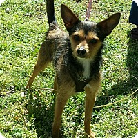 Adopt A Pet :: Thumper - Bedminster, NJ