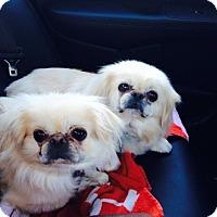 Adopt A Pet :: Evie - Richmond, VA