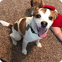 Adopt A Pet :: Robin - Toledo, OH