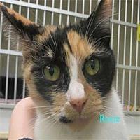 Adopt A Pet :: Roxie - Warren, PA