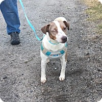Adopt A Pet :: Jack is in Rhode Island! - Plainfield, CT