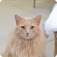 Adopt A Pet :: Cedric - Delaware, OH